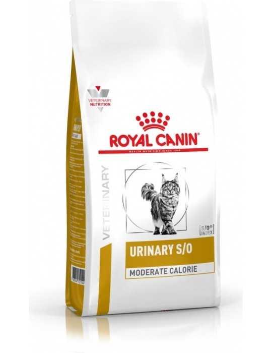 Shampoo secco fresh hair 250ml - kevin murphy